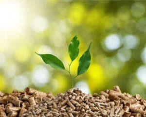 nachwachsende Rohstoffe - Biomasse